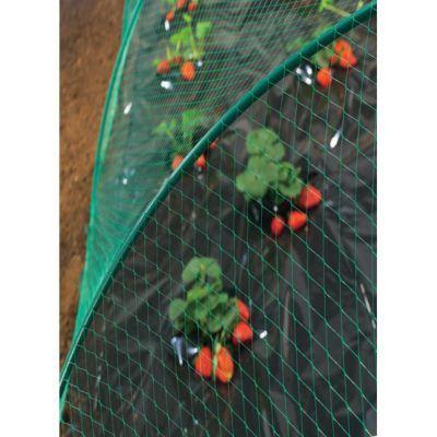 Filet De Protection Oiseau Nortene 5 X 10 M Castorama