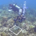 Reef preservation, not recovery, priority for Cayman
