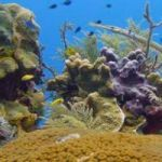 Caribbean reefs too weak to survive sea-level rise