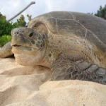 Battle against turtle poaching continues