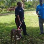 Cops and DoA focus on dangerous dogs