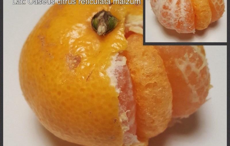Mandarine cheez doodle