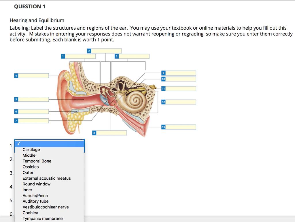 34 Label The Ear Anatomy Diagram