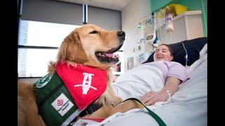 Meet Pinto the golden retriever: Texas Children's Hospital ...