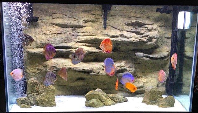fish tank and aquarium backgrounds