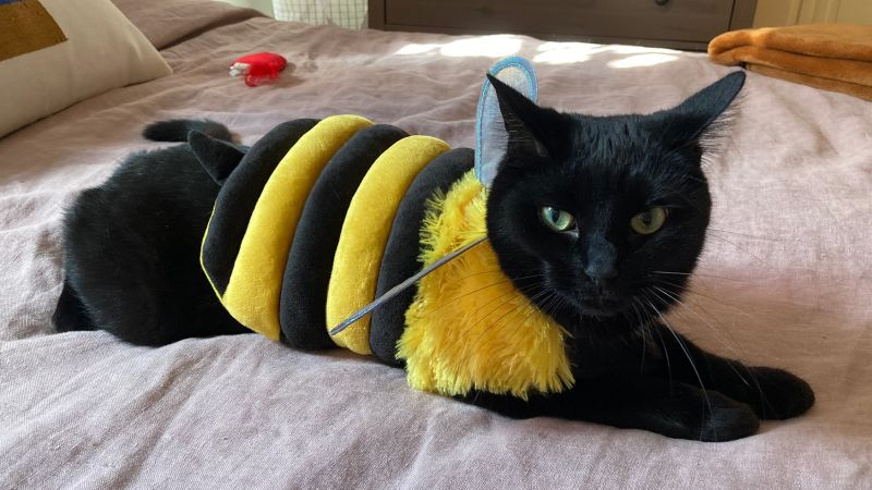 Hyde & EEK! Boutique Bee Full Body Dog and Cat Costume