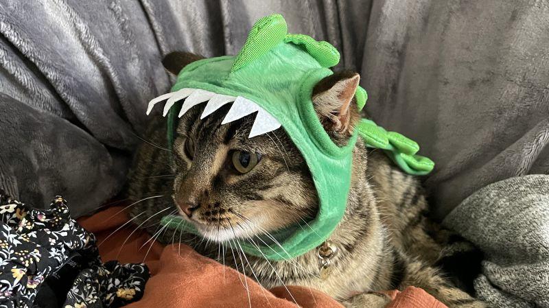Hyde & EEK! Boutique Dino Hat H&E Cat Costume