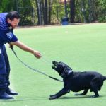 K-9 units impress young students at school fair