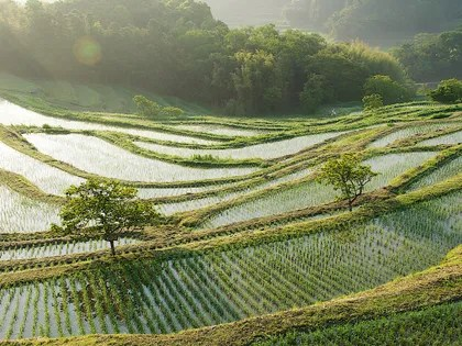 Image may contain: Nature, Outdoors, Field, Grassland, Countryside, Paddy Field, and Rural