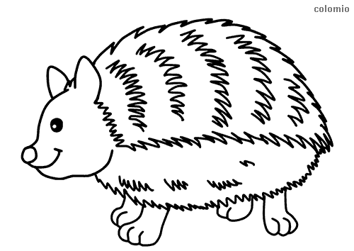 Forest Animals Coloring Pages Free Printable Forest Animals Coloring Sheets