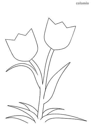 Tulips Coloring Pages Free Printable Tulip Coloring Sheets