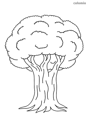 Trees Coloring Pages Free Printable Tree Coloring Sheets