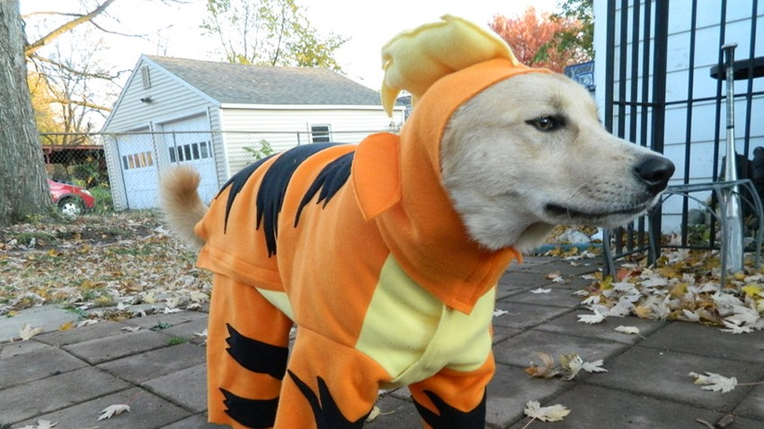 Growlithe doggo