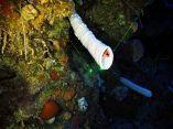 estudio-arrecifes-mesofoticos-17