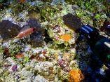 estudio-arrecifes-mesofoticos-19