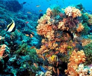 corales cubanos