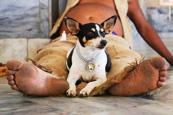 Muchos de los fieles realizan la peregrinación descalzos y acompañados de sus perros, ambos componentes están directamente relacionados con la representación simbólica de la deidad. Foto: Darío Gabriel Sánchez García/CUBADEBATE.