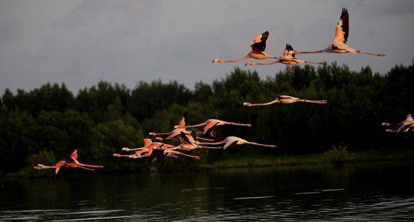 Medio ambiente. Foto: Ismael Francisco/ Cubadebate.