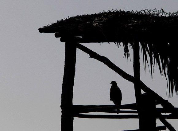 Medio ambiente. Foto: Ismael Francisco/Cubadebate.