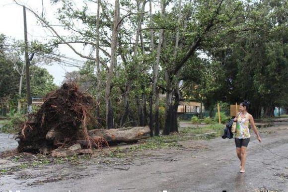 Los vientos de tormenta tropical del huracán Irma que azotaron durante toda la noche y madrugada, el sureste de la capital, provocaron la caída de árboles y del tendido eléctrico en algunas zonas del municipio de Cotorro, en la Habana, Cuba, el 10 de septiembre de 2017. ACN FOTO/Jorge LEGAÑOA ALONSO