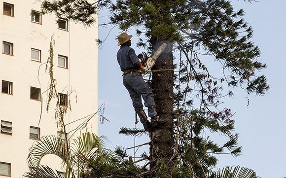 Recuperación después del paso de huracan Irma en la Habana. Foto: Jennifer Romero/ Cubadebate.