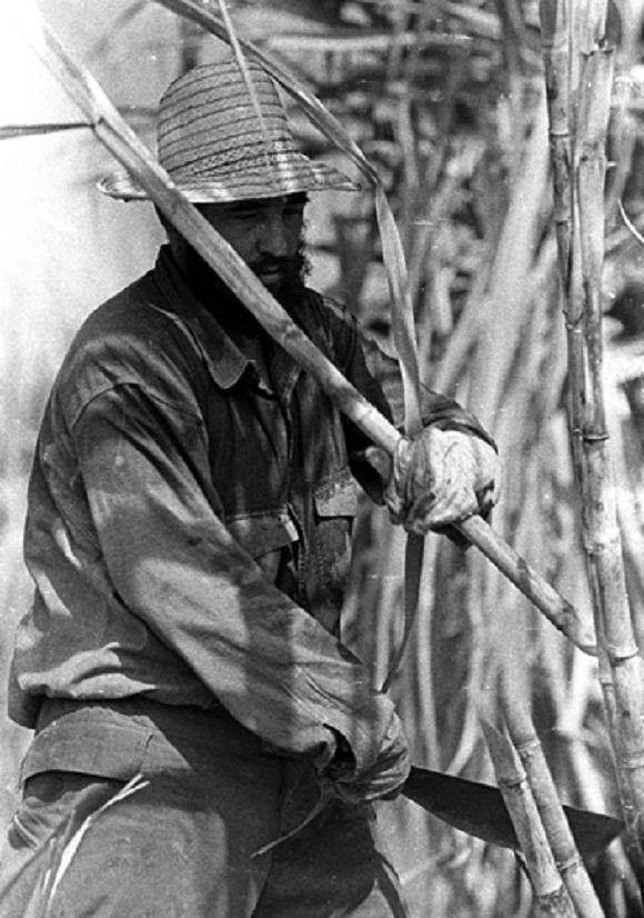 En los cañaverales de Camagüey cortando caña, 19 de marzo de 1985. Foto: Sitio Fidel Soldado de las Ideas