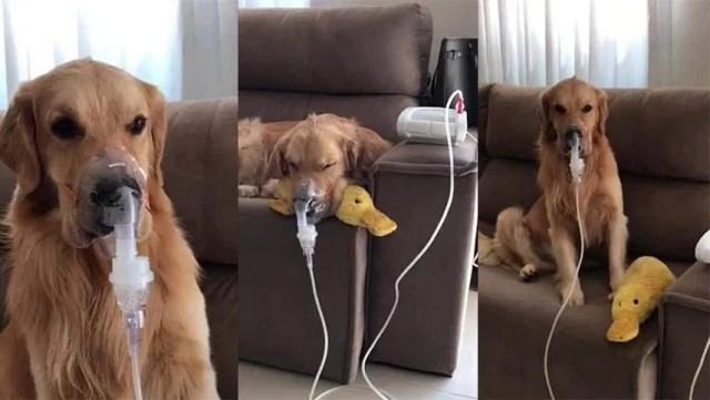 Es un perro asmático, era maltratado y pudo encontrar el amor de una  familia que lo