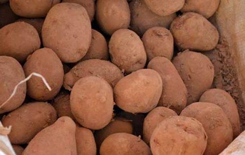 Khoai tây TQ đội lốt khoai Đà Lạt: Giá tăng gấp 3 nhờ bôi đất đỏ - Ảnh 1