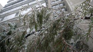 freeezing rain in Bucuresti polei in bucuresti iarna zapada viscol cod portocaliu (154)