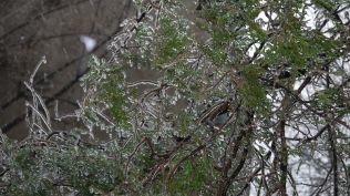 freeezing rain in Bucuresti polei in bucuresti iarna zapada viscol cod portocaliu (7)