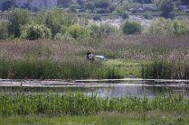 delta bucuresti - lacul vacaresti (142)