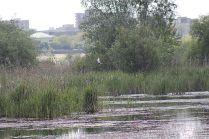 delta bucuresti - lacul vacaresti (179)