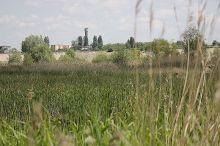 delta bucuresti - lacul vacaresti (305)