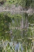 delta bucuresti - lacul vacaresti (313)