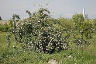 delta bucuresti - lacul vacaresti (453)