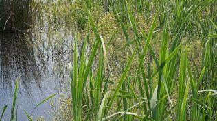 delta bucuresti - lacul vacaresti (474)