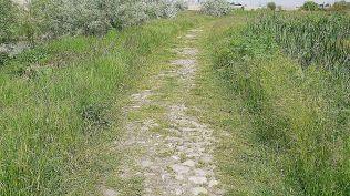 delta bucuresti - lacul vacaresti (490)