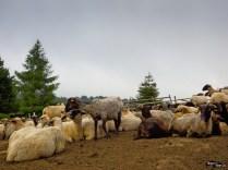 La stână pe Valea Doftanei
