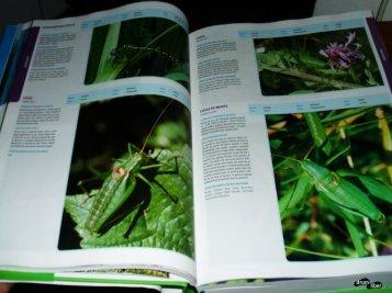 Catalogul habitatelor, speciilor și siturilor Natura 2000