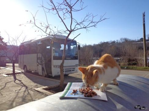 Pisică flămândă și autocarul Zahir Travel