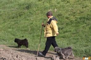 Văcarul și cei doi căței