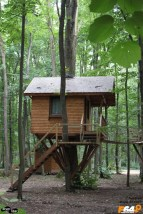 Casa din copac