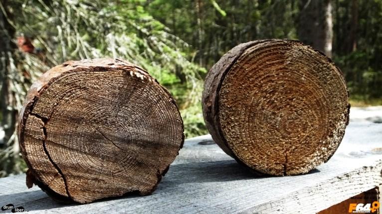 În tinov, arborii cresc mult mai greu