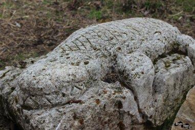 Crocodil