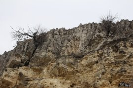 Un copac și-a făcut loc printre straturi