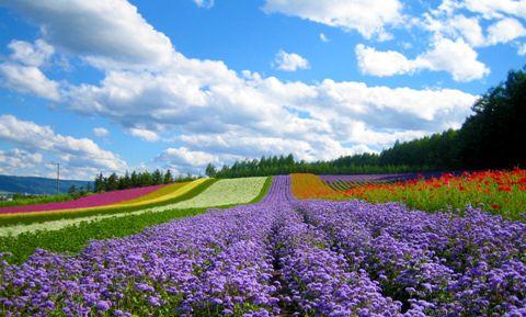 Đà Lạt - Thành phố ngàn hoa