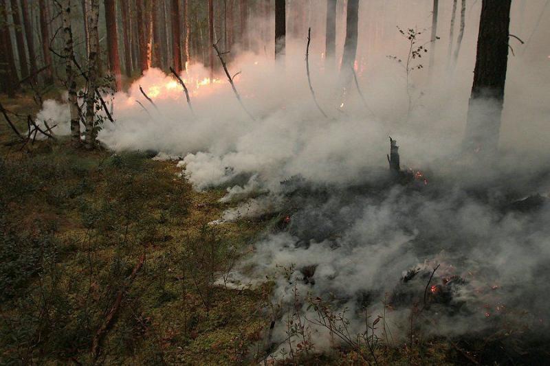 Extinguishing Wildfires 16