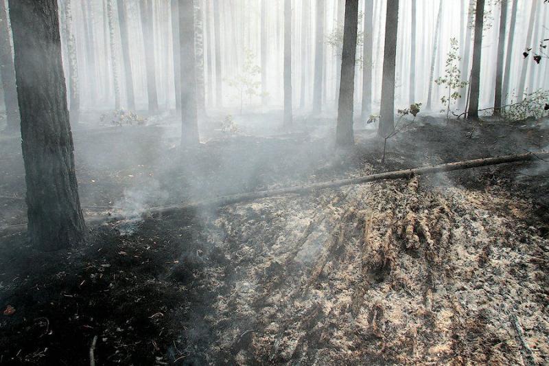 Extinguishing Wildfires 23