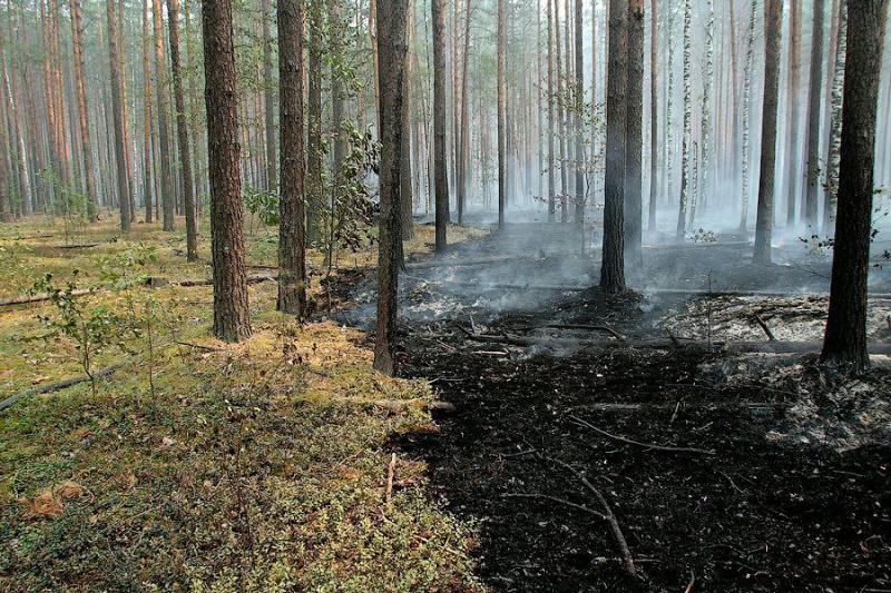 Extinguishing Wildfires 28