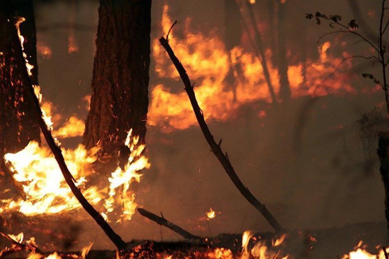 Extinguishing Wildfires 3